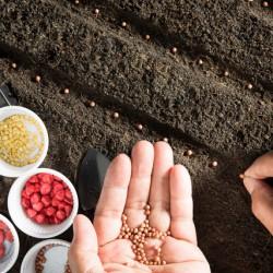 人材育成は植物を育てることと重なります。