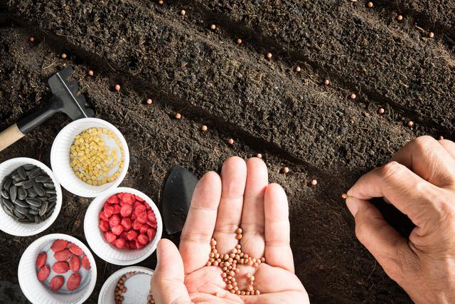 人材育成は植物を育てることと重なります。 - 社会保険労務士法人アールワン | 東京都千代田区
